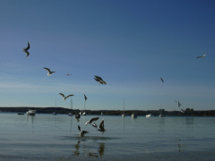 Ammersee081006